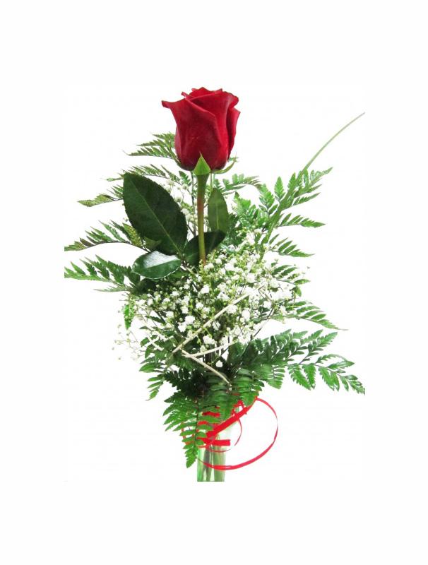 rosa individual